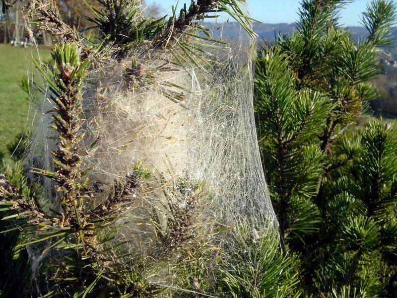 Immagine di Distruzione meccanica dei nidi