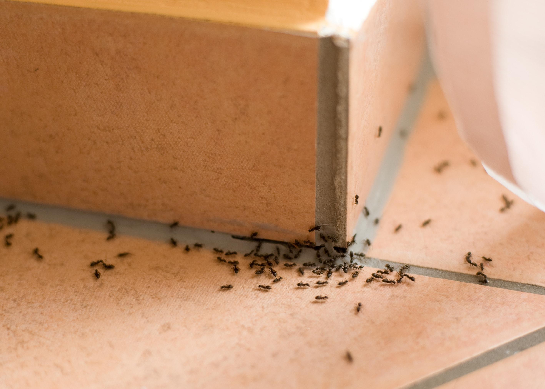 formiche-disinfestazione-napoli-ecosistem