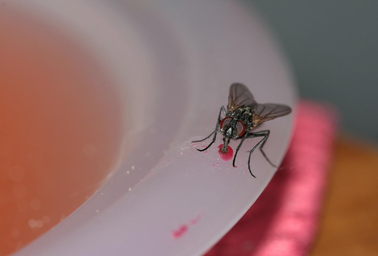 mosche-disinfestazione-ecosistem-napoli