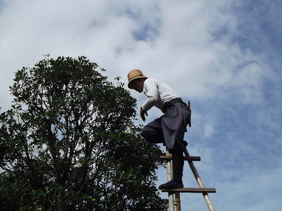 potatura-polliceverde-ecosistem-napoli