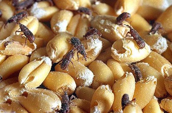 parassitiindustriealimentari-insettidelcibo-ecosistem.napoli